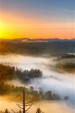 Sunrise, fog, trees, morning, mountains