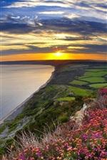 Sunset, sea, coast, flowers, fields, clouds