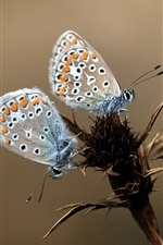 Preview iPhone wallpaper Three butterflies, plant