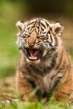 Preview iPhone wallpaper Tiger cub yawn
