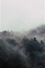 Preview iPhone wallpaper Trees, fog, morning, top view