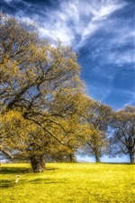 Preview iPhone wallpaper Trees, grass, blue sky, beautiful nature