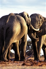 Preview iPhone wallpaper Two elephants friendship
