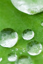 Preview iPhone wallpaper Water drops, green leaf, macro photography