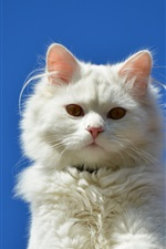 Preview iPhone wallpaper White cat, blue sky