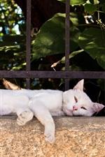 Gato branco deitado no lado da cerca