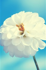 iPhone壁紙のプレビュー 白い花、青い空