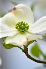 미리보기 iPhone 배경 화면 흰색 꽃잎 사진 촬영