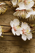 Preview iPhone wallpaper White plum flowers, wood background