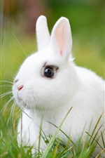Preview iPhone wallpaper White rabbit, grass