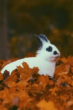 Preview iPhone wallpaper White rabbit in autumn, yellow foliage