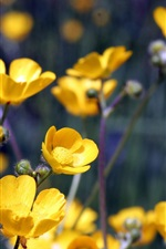 Preview iPhone wallpaper Yellow flowers, twigs