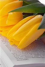 Yellow tulip and book