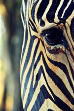 Preview iPhone wallpaper Zebra head close-up, eye