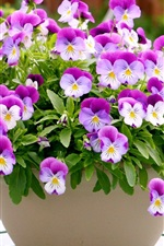 Preview iPhone wallpaper A bowl of pansies, purple white petals