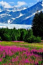 미리보기 iPhone 배경 화면 알래스카, 꽃, 산, 빙하, 잔디, 나무