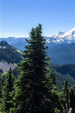 Preview iPhone wallpaper Alaska, mountains, trees, forest, blue sky, USA