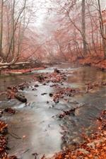 미리보기 iPhone 배경 화면 가을, 숲, 강, 붉은 잎, 안개