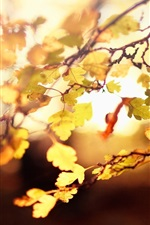 Preview iPhone wallpaper Autumn, leaves, twigs, backlights