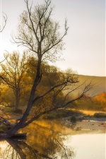 Autumn, river, trees, yellow style, fog