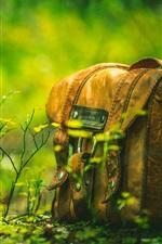 Preview iPhone wallpaper Bag, forest, grass, mushroom
