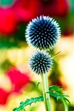 Preview iPhone wallpaper Ball flowers, needle plants