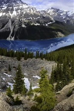 Preview iPhone wallpaper Banff National Park, Peyto Lake, mountains, forest, Canada