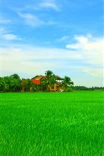 Beautiful Asian tropical scenery, house, green field, sky, trees