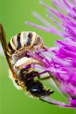 Preview iPhone wallpaper Bee, purple flower, pollen