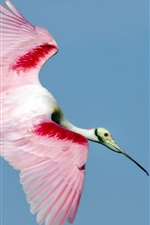 Preview iPhone wallpaper Bird flying, white red feathers, wings
