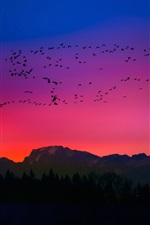 Preview iPhone wallpaper Birds, sunset, red sky, silhouette, mountains