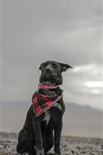 Preview iPhone wallpaper Black dog, scarf, stones, sky, clouds