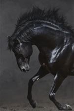Preview iPhone wallpaper Black horse run in the dark