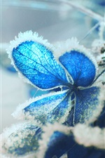 Preview iPhone wallpaper Blue hydrangea flower, frost