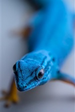 Preview iPhone wallpaper Blue lizard