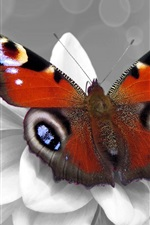 Preview iPhone wallpaper Butterfly and white flower