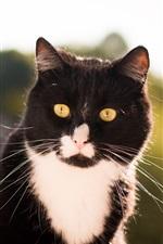 iPhone fondos de pantalla Cat vista frontal, blanco y negro, ojos amarillos