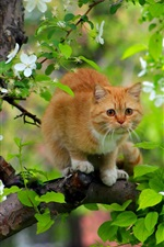 Preview iPhone wallpaper Cat in tree, flowers, spring