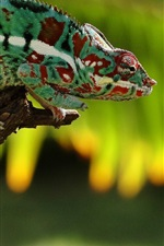 Chameleon rest, green, branch