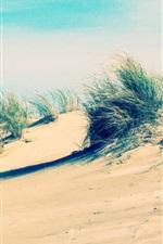 Preview iPhone wallpaper Coast, beach, sand, grass, wind