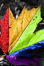 Preview iPhone wallpaper Colorful maple leaf, rainbow colors