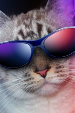 Preview iPhone wallpaper Cool cat, sunglasses, humor