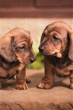 Preview iPhone wallpaper Cute dachshund, puppies