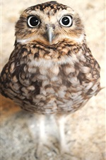 Preview iPhone wallpaper Cute owl look at you