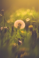Preview iPhone wallpaper Dandelion, bokeh, summer