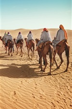 Preview iPhone wallpaper Desert, camels, tourism