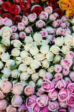 Preview iPhone wallpaper Different colors roses, pink, white, yellow, orange, red
