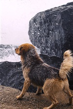 Preview iPhone wallpaper Dog at river side, water splash, wet, stones