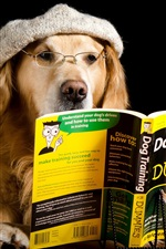 Preview iPhone wallpaper Dog reading book, funny animals