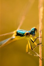 Preview iPhone wallpaper Dragonfly close-up, eyes, head, bokeh